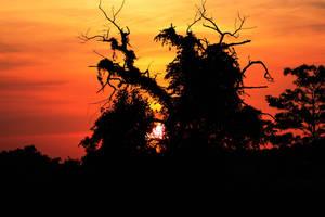 Sunset Hug by Nefarious069