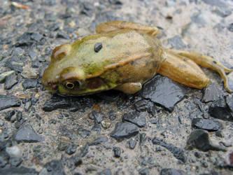 Deadfrog