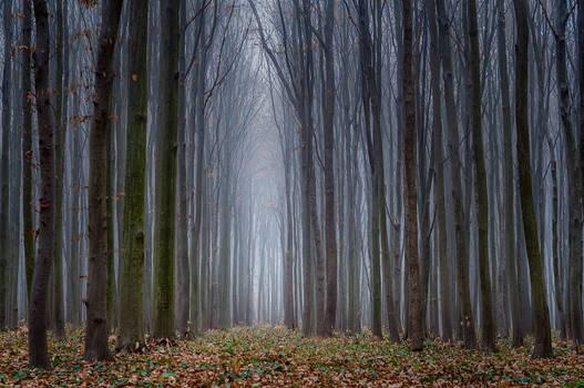 Hazy Forest III
