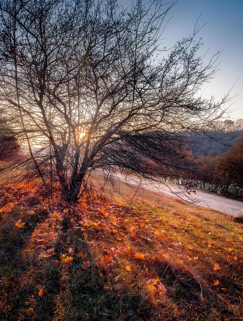 Forgotten Autumn View by third-one