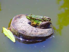Frog by Twi-art