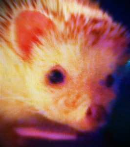 Tango-the-Hedgehog's Profile Picture