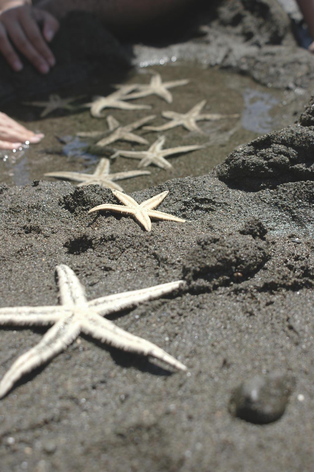 Stars by the Sea II by missoptimism