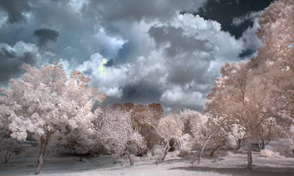 Cloudy Day by RoieG