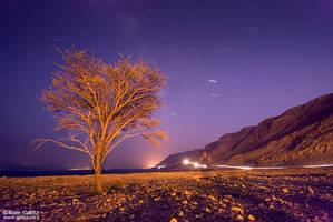 Dead Sea, Live Tree by RoieG
