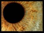 EyeFlower by RoieG