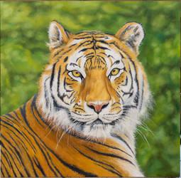 Tiger Portrait by MarkusMalerei