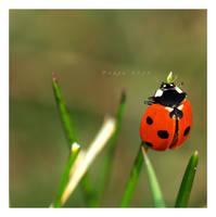Ladybugs.... by Tanja0869