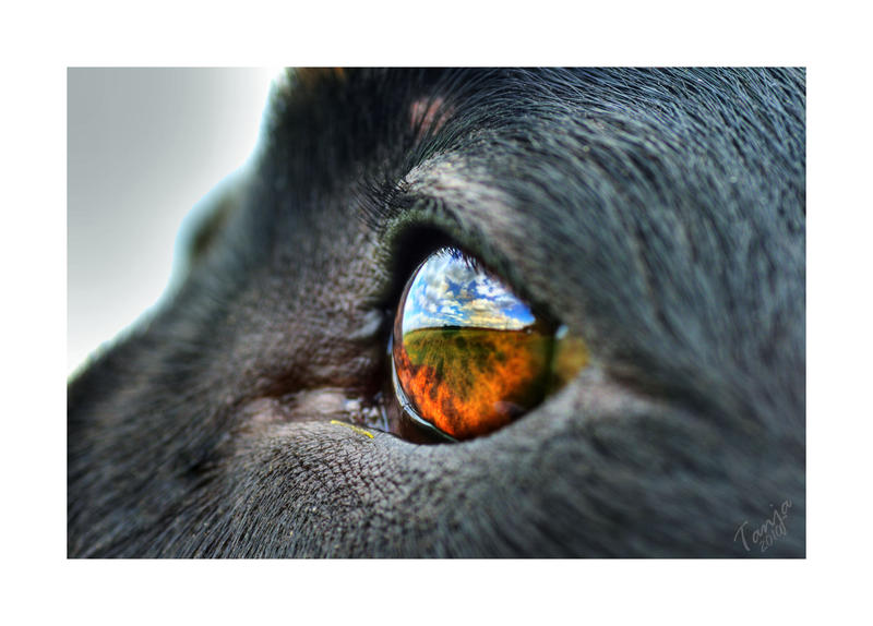 The World In Dog Eyes by Tanja0869