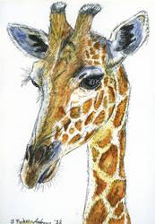 'Giraffe Portrait' (copyr) jessparkerandrews.co.uk by jessparkerandrews