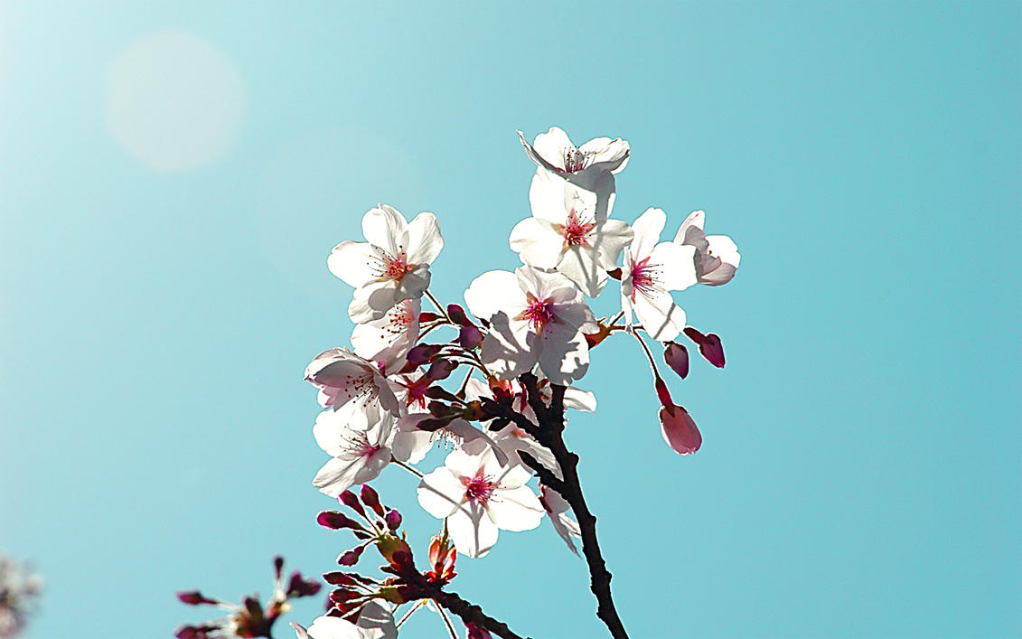 blossom chat sites Cherry blossoms chat room [public] created by marylemon this room is for  people who wants to meet people and make friends please, respect the users  and.
