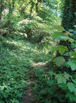Leafy land...