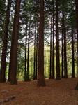 Woodland stock