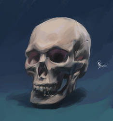 Photo study of a skull by pcenero
