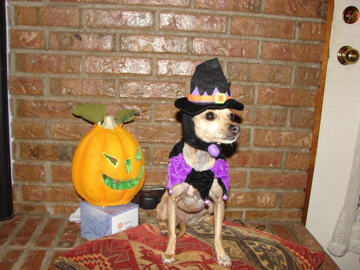 Penny on Halloween