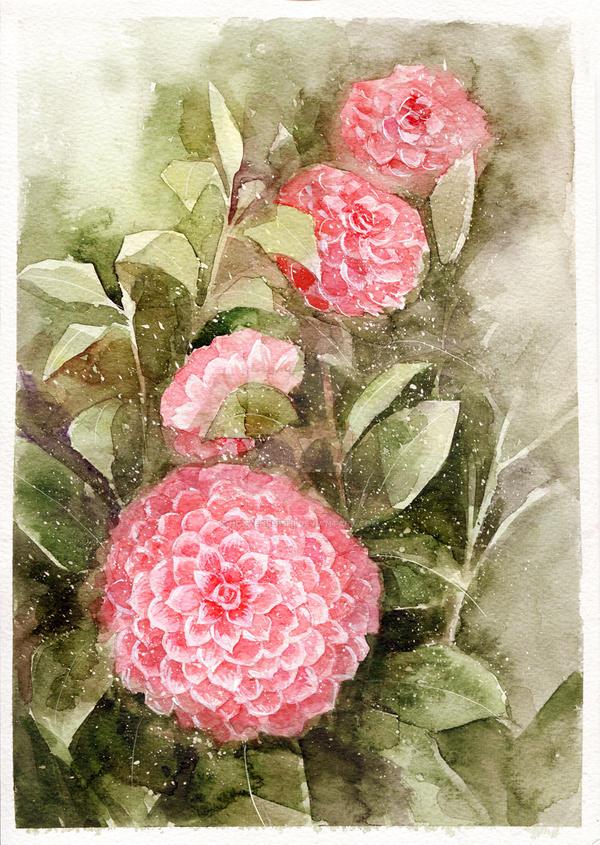 Camellia by nguyenshishi