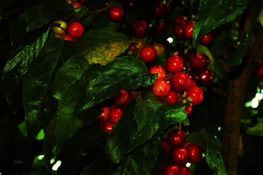 Cherry .. Maybe