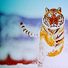 eye of tiger by CameronRS