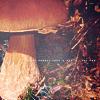 mushrooms by CameronRS