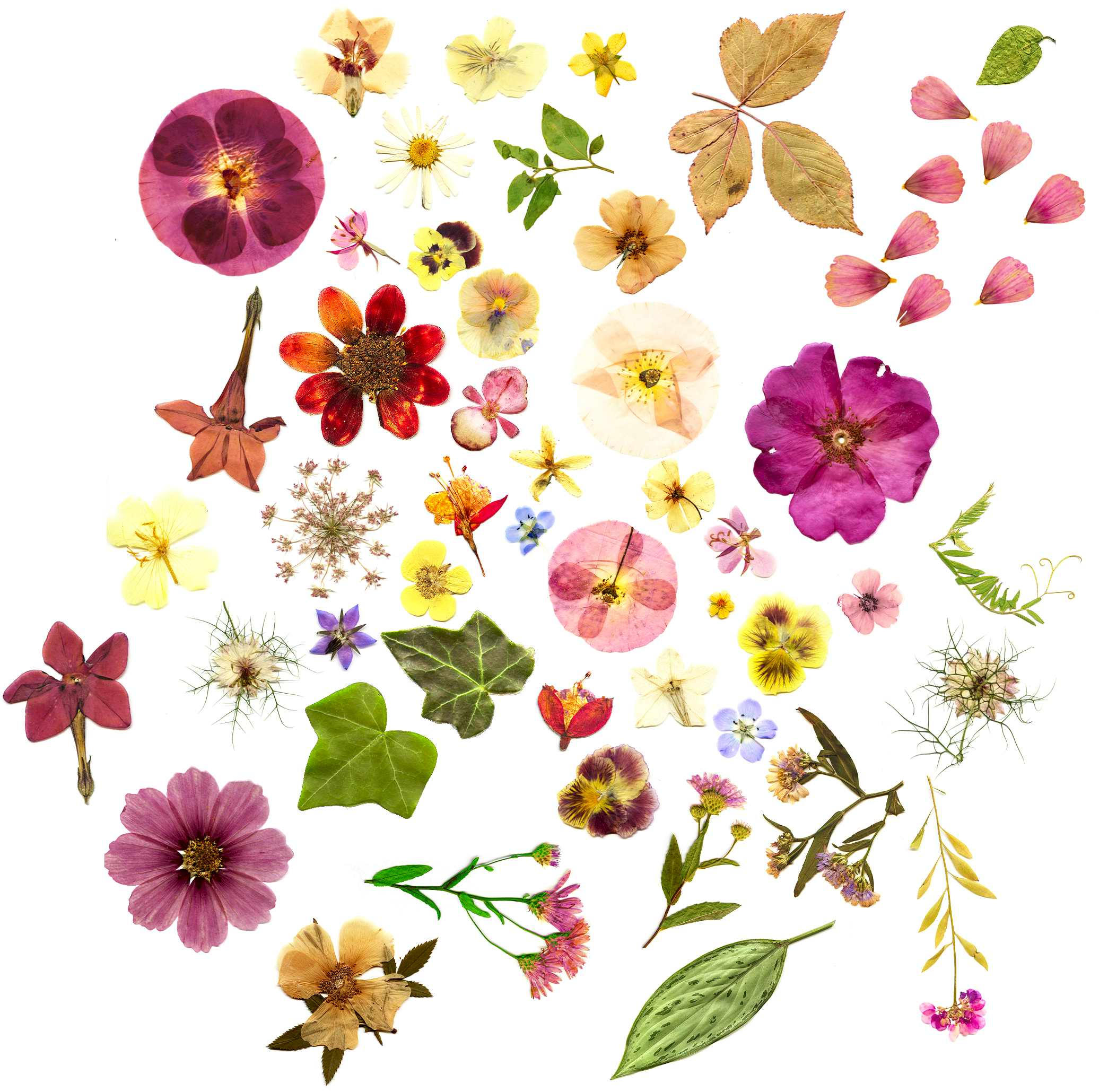 Floral stockpic by foley-resources