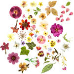Floral stockpic