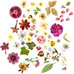 Floral stockpic