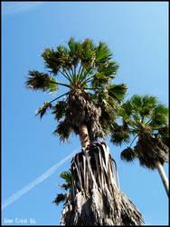Palm trees by ann-crow