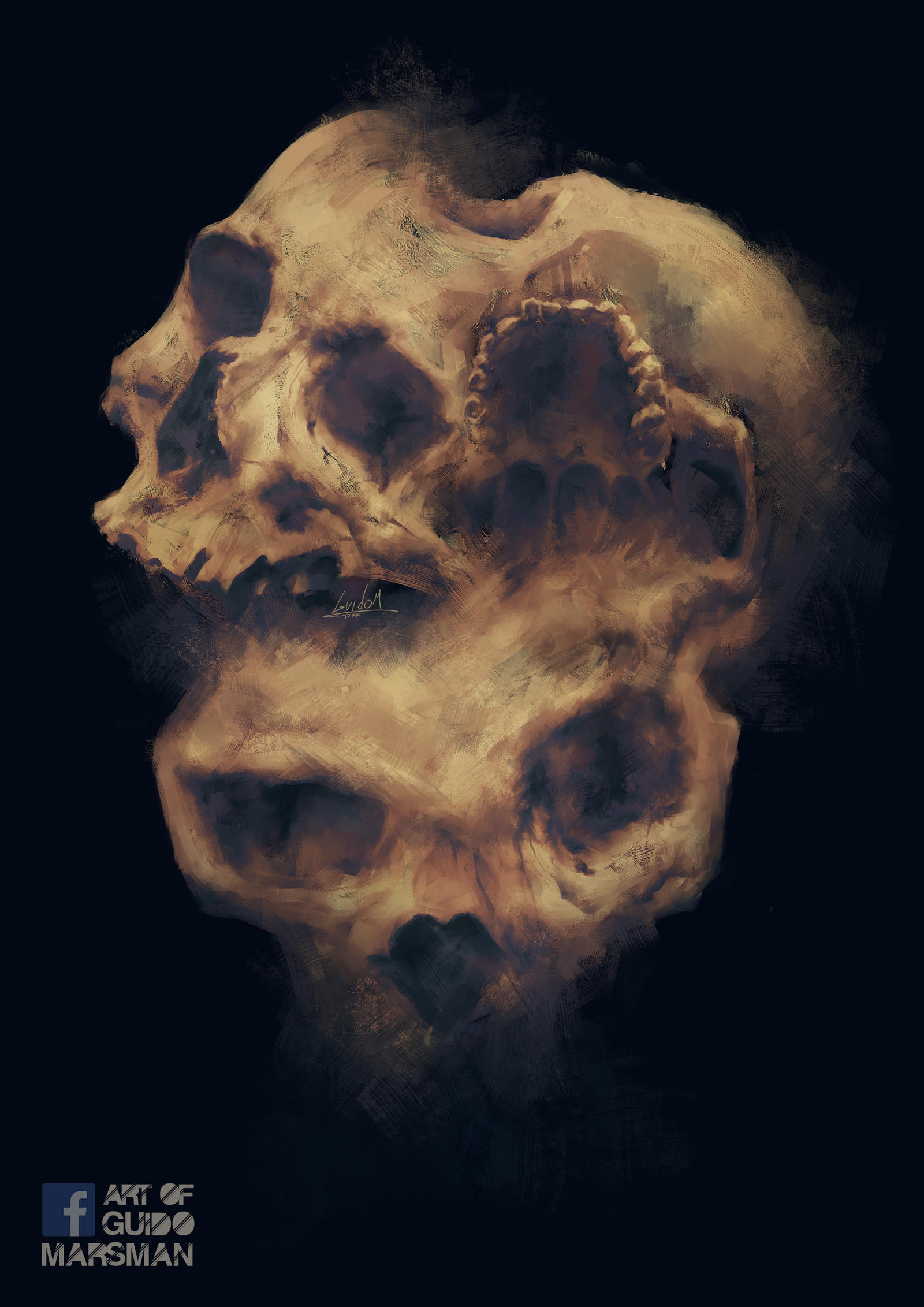 Skull studys by Lolzdui