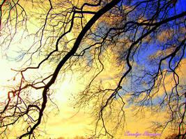 Branching Sky by jodo52