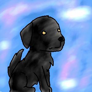 Black Labrador by hanare