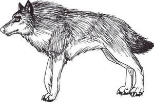 Gyerfry by gyerfry-the-wolf