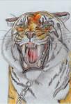 shiva the tiger twd