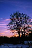 Dawn Winter by Kaylian