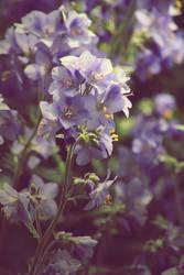 fade to blue by kawaiiotaku01