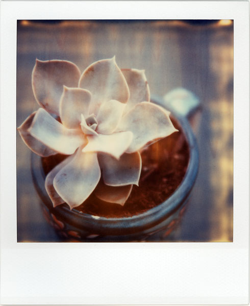 Succulent in a Cup by futurowoman