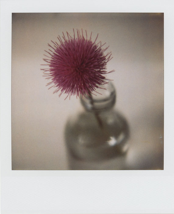 a thistle in a bottle by futurowoman