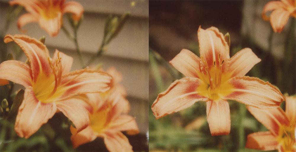 Lilies in the Secret Garden by futurowoman