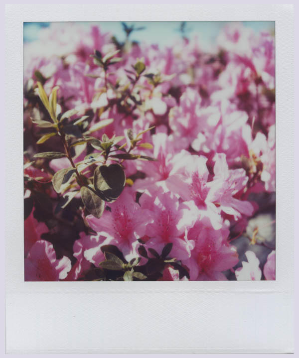 Wintertime in Pink II by futurowoman