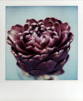 The Purple Artichoke