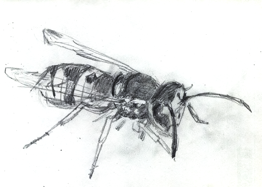 A wasp by sfxdx