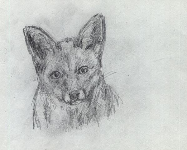 Foxface by sfxdx