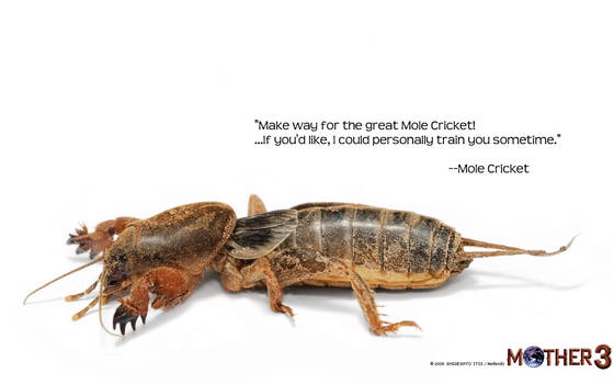 Mole Cricket Wallpaper