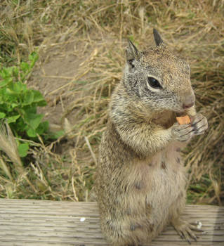 Squirrel Eating by Smilelil1