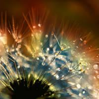 dandelion fluff.. by AdrianaKH-75