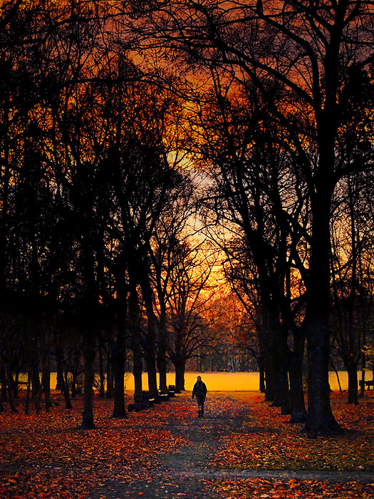 dimming in the park