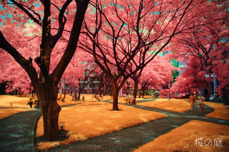 Sakura Garden By Funnyillusion On Deviantart