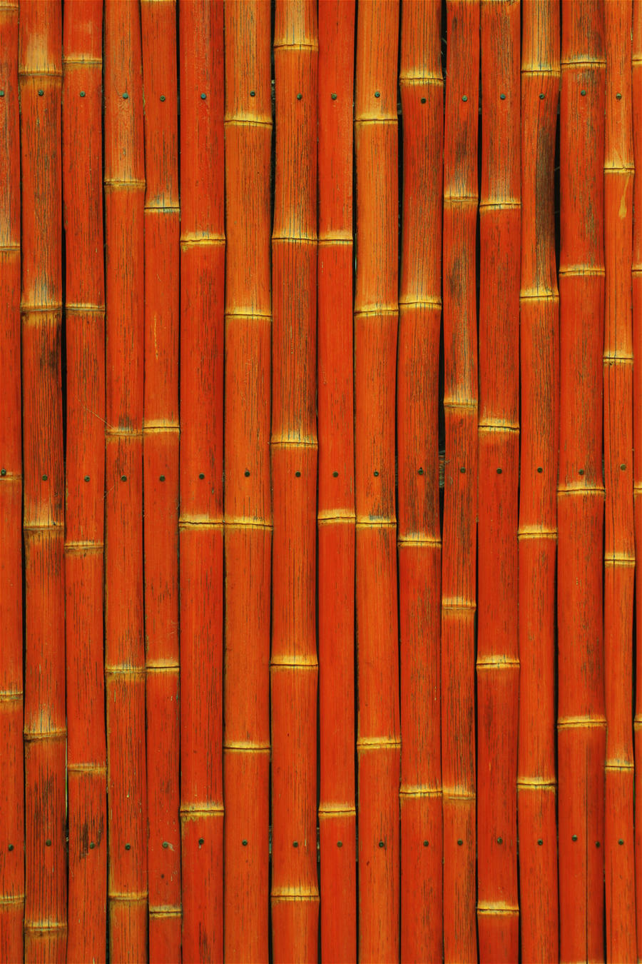 Big Bamboo by StockStockStuff