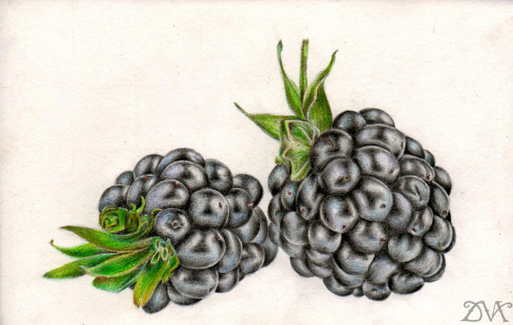 Blackberries. Want some? by MarysDrawing