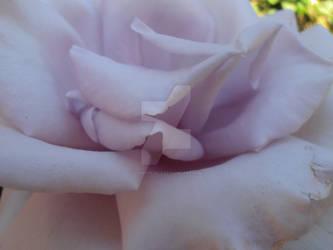 Floral Folds