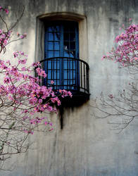 Blossom Cradled Window